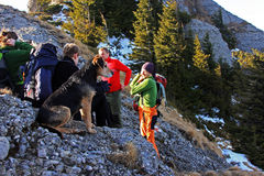 Dog resting with his new friends on a mountain Stock Images