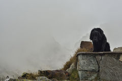 Dog resting near a mountain shelter. Black beautiful dog resting near a mountain shelter. Mont Blanc. France alps Royalty Free Stock Images
