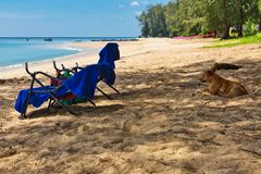 Dog resting near the sun beach chairs stock photo