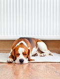 Dog resting near a warm radiator Stock Photo