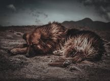 Dog resting in Patagonia stock images