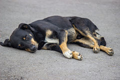 Dog resting on the pavement in hot weather Stock Photo