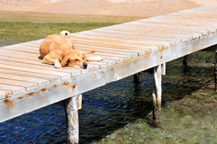 Dog resting on pier Stock Images