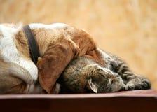 Dog resting Stock Photography