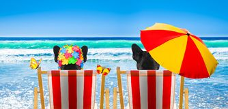Dog relaxing on a beach chair. Dog resting and relaxing on a hammock or beach chair under umbrella at the beach ocean shore, on summer vacation holidays royalty free stock image