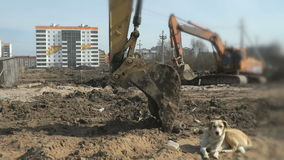 Dog resting on the sand at a construction site stock video