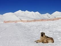 Dog resting on snow at nice sun day Stock Photography