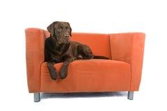 Dog resting on sofa stock photos