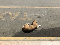 Dog resting on a taxi stop royalty free stock photography