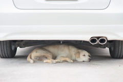 A dog resting under the car Royalty Free Stock Photo