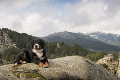 Dog rests on the rock at the top of the mountain. Contemplating a beautiful landscape Stock Images