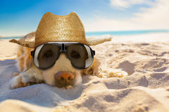 Dog retired at the beach. Golden retriever dog relaxing, resting,or sleeping at the beach, for retirement or retired stock photography