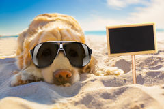 Dog retired at the beach Stock Images