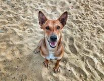 dog& x27; retrato de s no campo Fotografia de Stock
