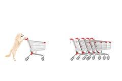 Dog returning an empty shopping cart royalty free stock image