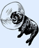 Dog returns from vet Royalty Free Stock Images