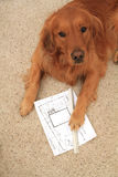 Dog reviewing deck plans Stock Image