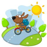Dog rides a bicycle. Royalty Free Stock Photo