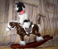 Dog riding a horse Royalty Free Stock Photo