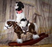 Dog riding a horse Stock Photo