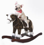 Dog riding a horse Royalty Free Stock Image