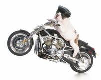 Dog riding motorcycle Stock Image
