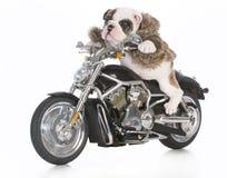 Dog riding motorcycle Stock Photos
