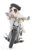 Dog riding a motorcycle Royalty Free Stock Photos
