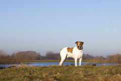 Dog on river bank Royalty Free Stock Photos