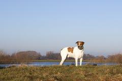 Dog on river bank Royalty Free Stock Photos