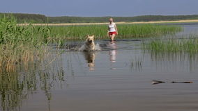 Dog, river, stick and fun. stock footage