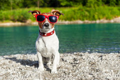 Dog at river in summer Stock Photos