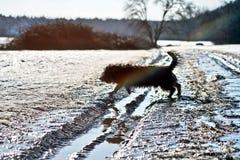 Dog on road Royalty Free Stock Image