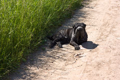 Dog on the Road Royalty Free Stock Photo