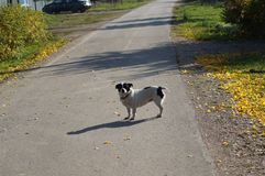 Dog on the road Stock Image