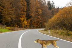 Dog on the road illustration. With ceramic figure of the dog Stock Photography