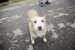 Dog road Stock Image