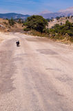Dog on the road Stock Photography