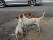 Dog Roadside Meeting stock image