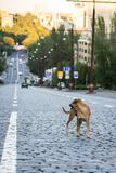 A dog on the roadway. Of a city road Royalty Free Stock Photo
