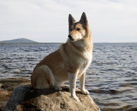 A dog on a rock Stock Photo