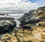Dog on the rock Stock Photos