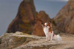 Dog rock stock image