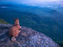 Dog on Rock Cliff with beautiful Sunrise Sky on Khao Luang mountain in Ramkhamhaeng National Park. Sukhothai province Thailand royalty free stock photos
