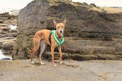 Dog Rock Climbing Royalty Free Stock Photos