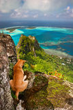 Dog on the rock, Maupiti Stock Photo