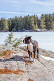 Dog on a Rock Royalty Free Stock Photos