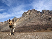 Dog and rocks royalty free stock photography