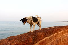 Dog on the rocks in the fortress of India royalty free stock photography
