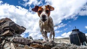 Dog on rocky ledge